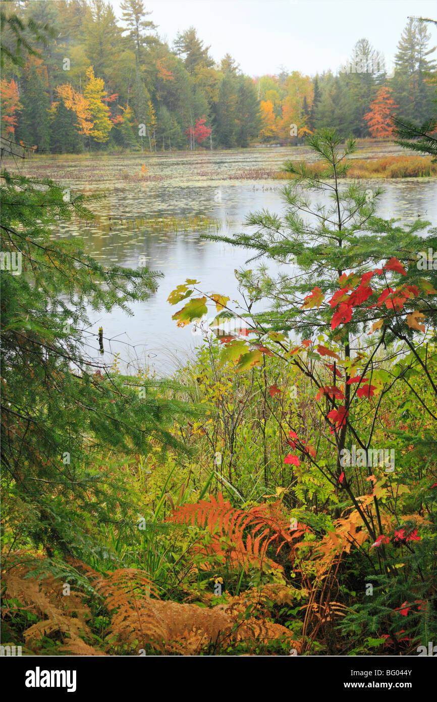 Mills Falls Trail, Adirondacks Park Agency Visitor Interpretive Center, Paul Smiths, New York - Stock Image