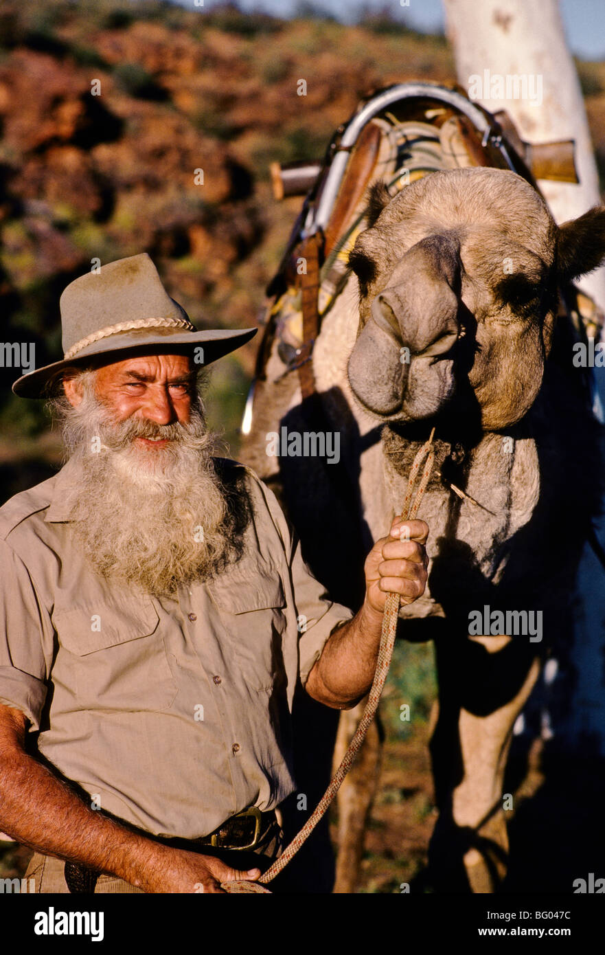Noel Fullerton with his favourite camel, Northern Territory, Australia, Vertical, - Stock Image