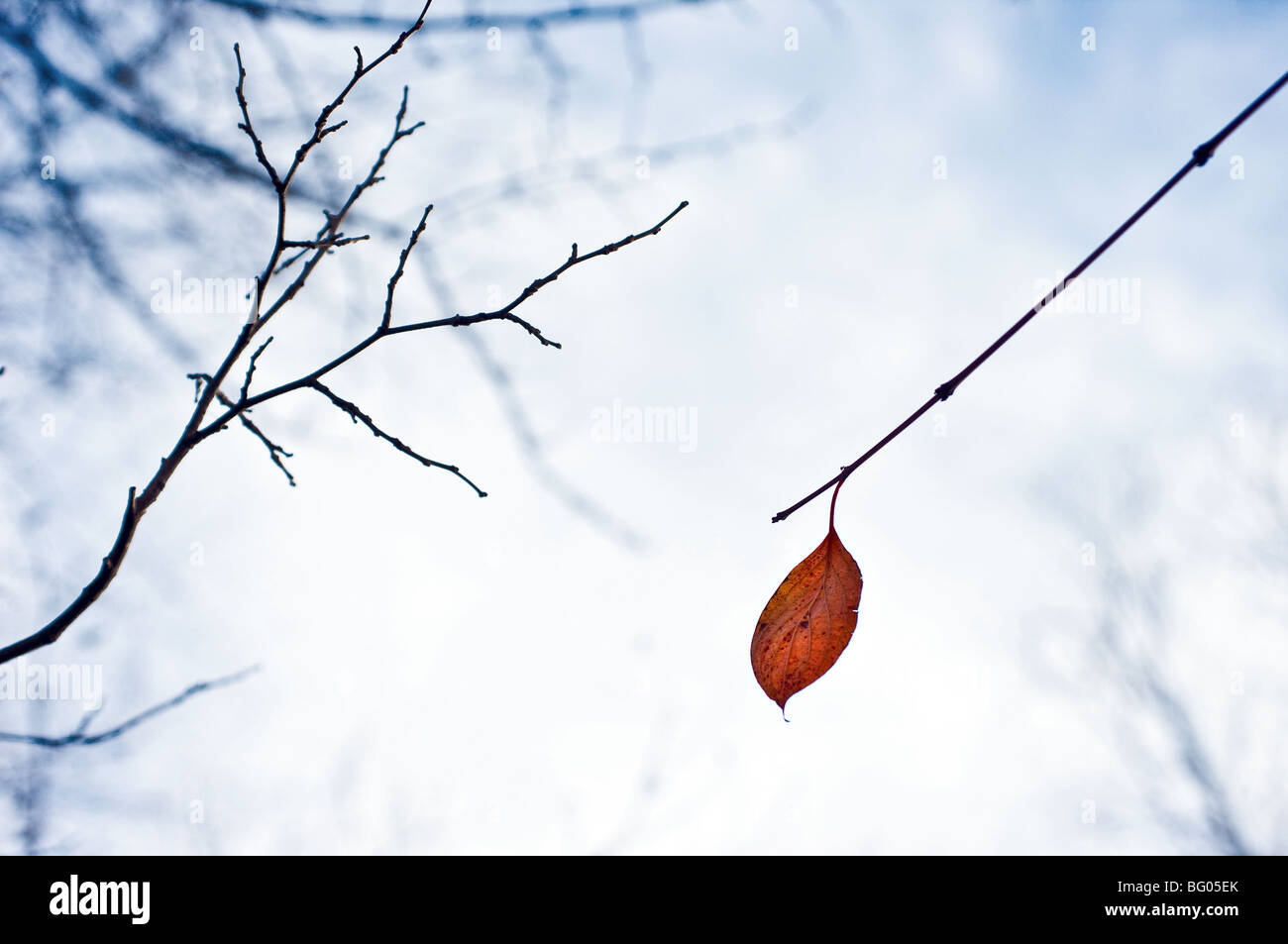 yellow lonesome leaf - Stock Image