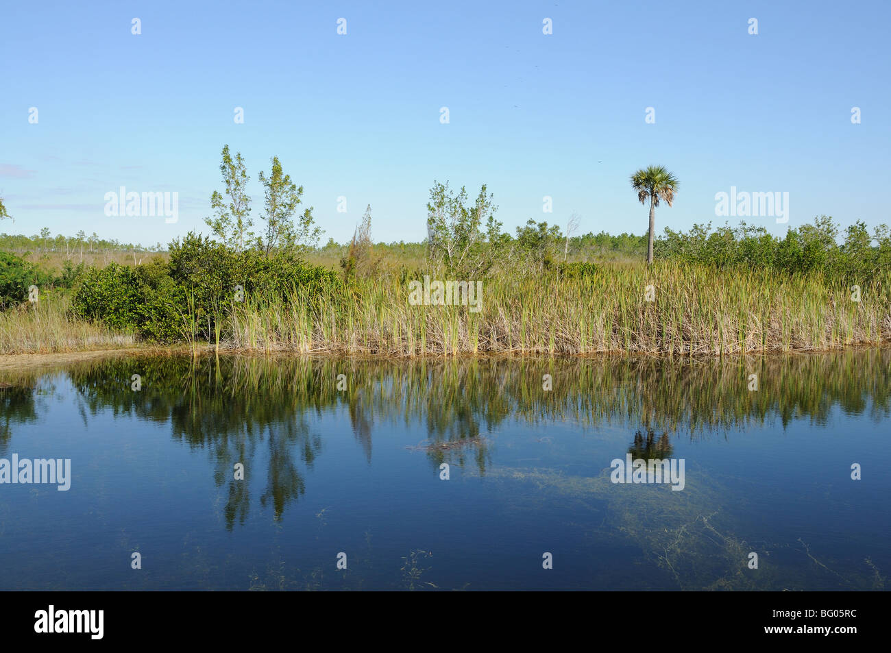 Landscape in the Everglades National Park, Florida USA - Stock Image