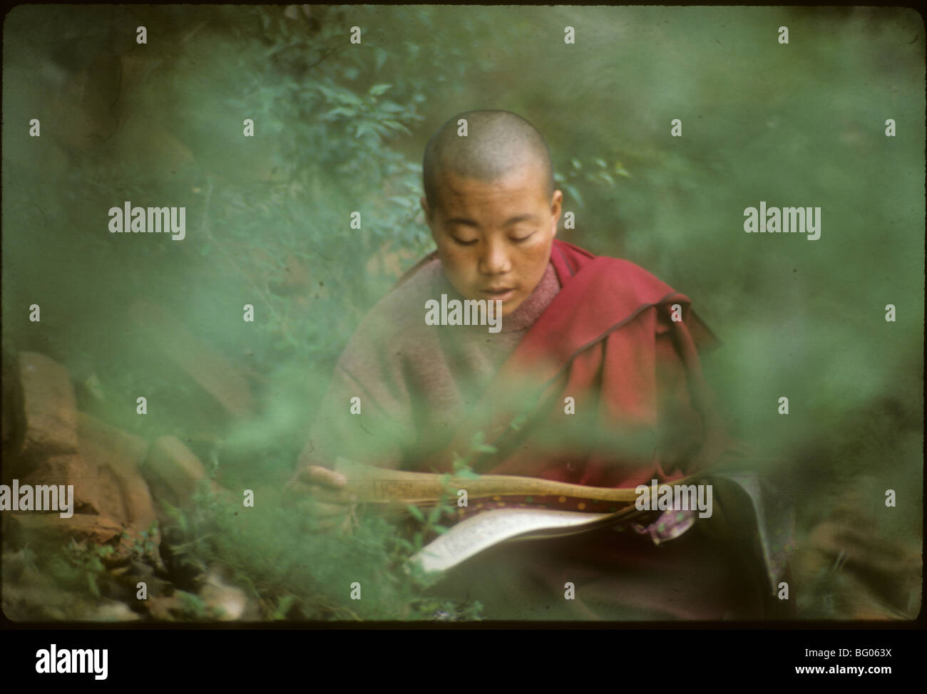 Portrait of a Buddhist nun studying Buddhist philosophy She is originally from Tibet but now living in exile in - Stock Image