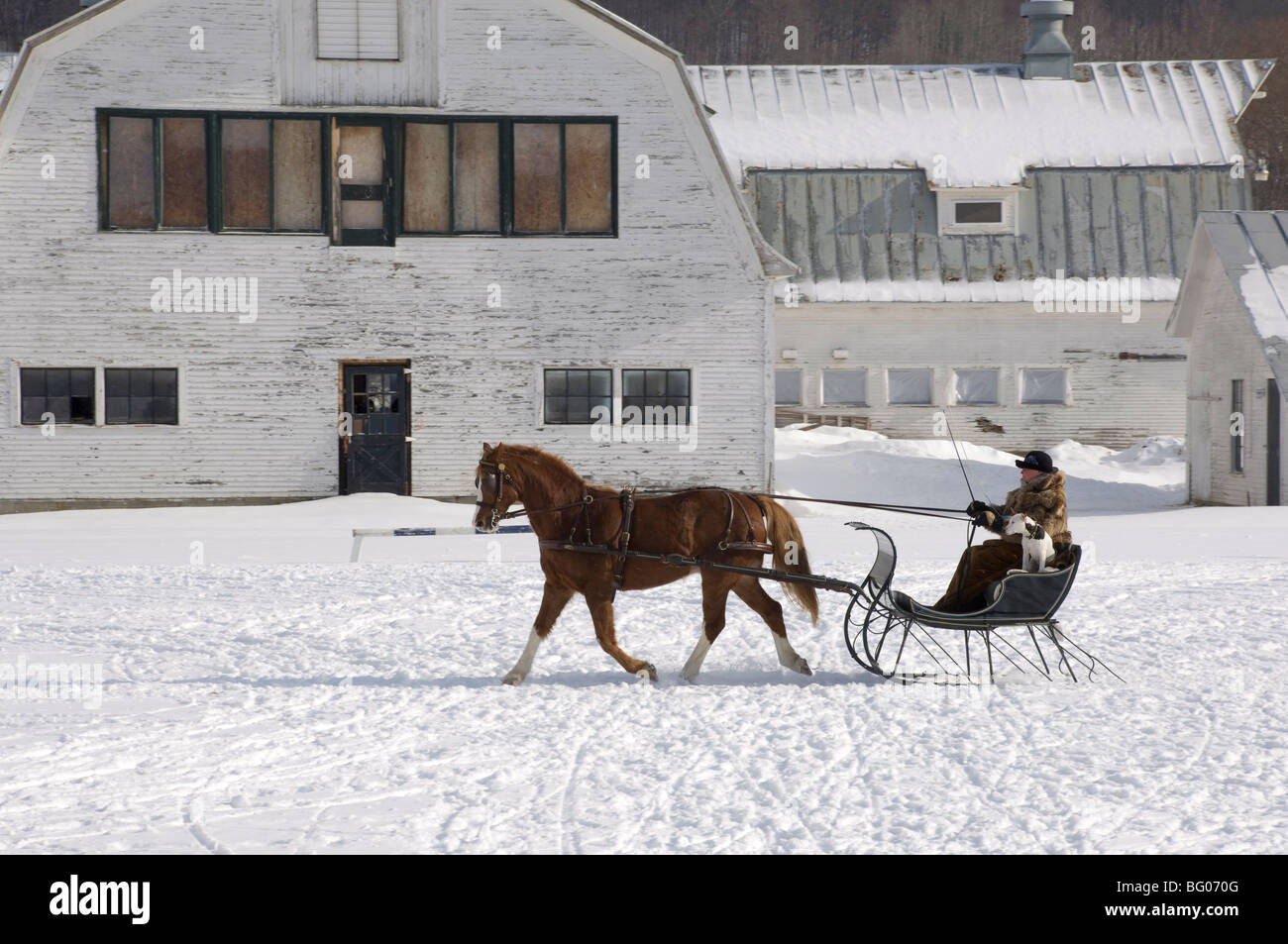 A woman taking a horse and sleigh ride in South Woodstock, Vermont, New England, United States of America, North - Stock Image