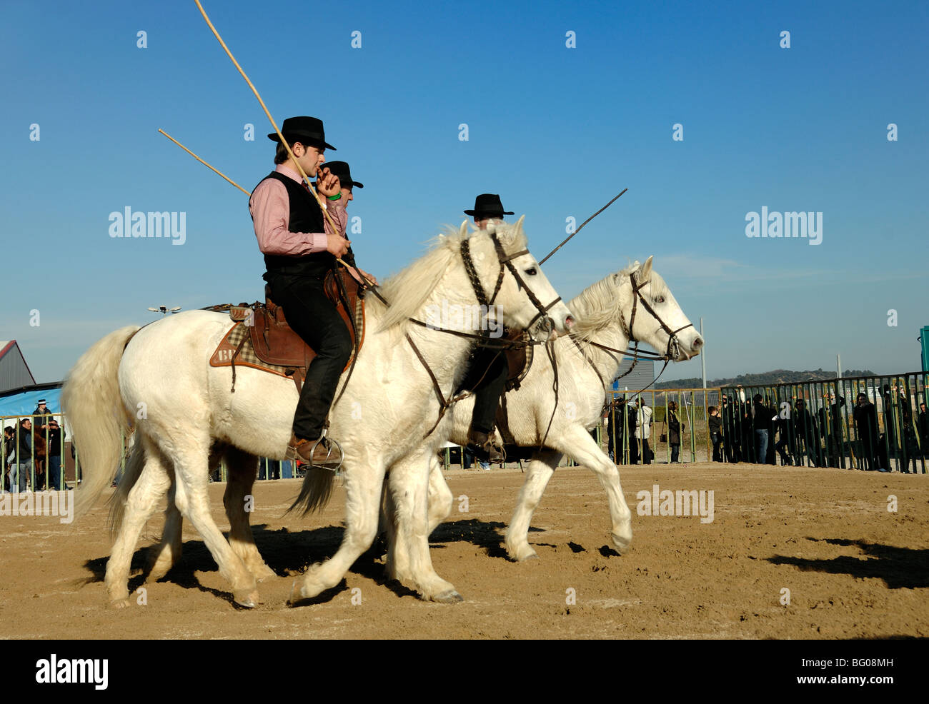 9d50fdcca9a Camargue Horse Riders known as  Guardians  or Provencal Cowboys Riding  White Camargue Horses