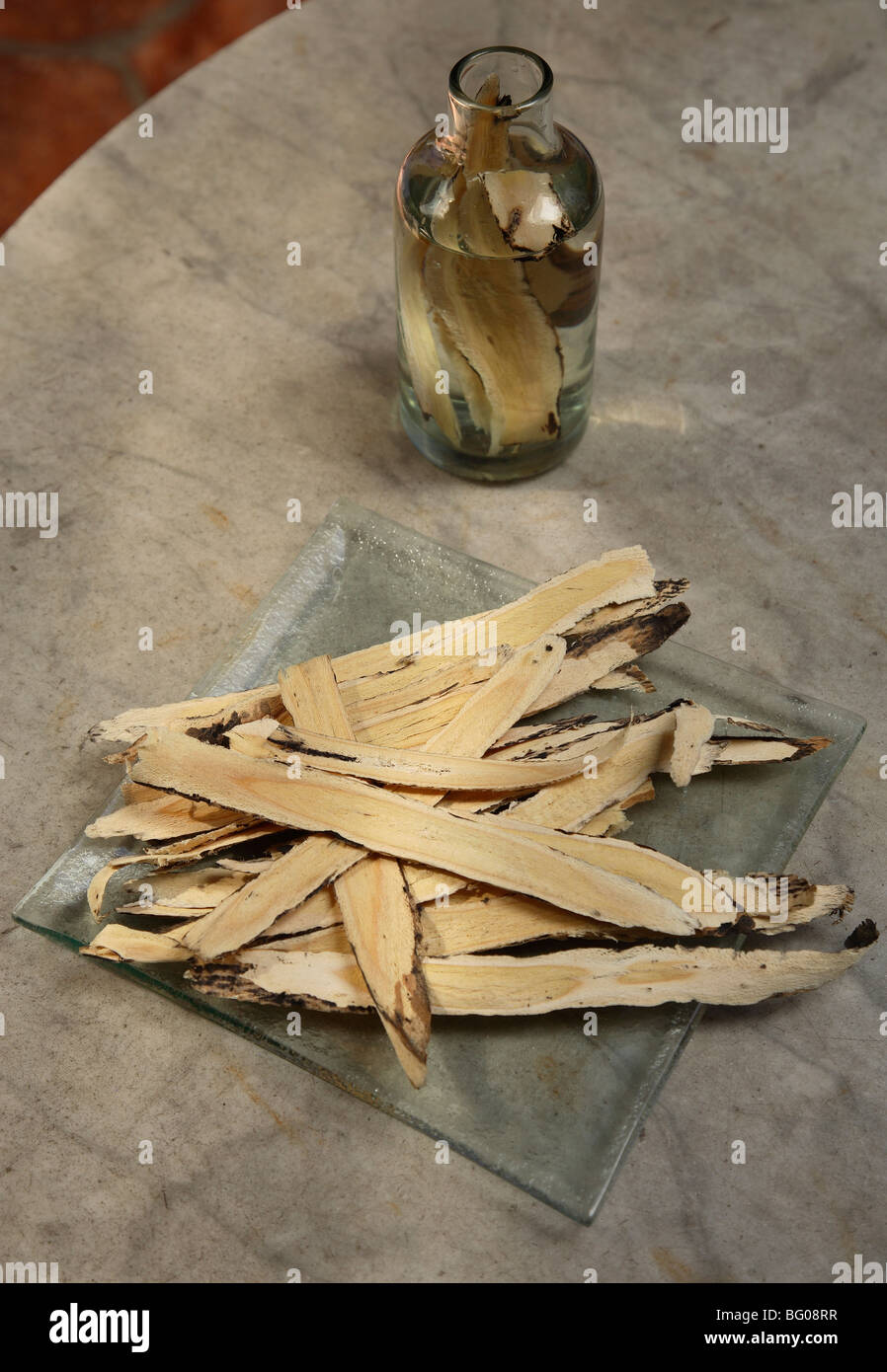 Astragalus, used to protect and support the immune system - Stock Image