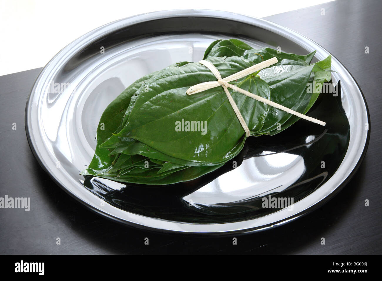 Betel vine leaves (Piper betle), the Piperaceae family, valued both as a mild stimulant and for its medicinal properties, - Stock Image