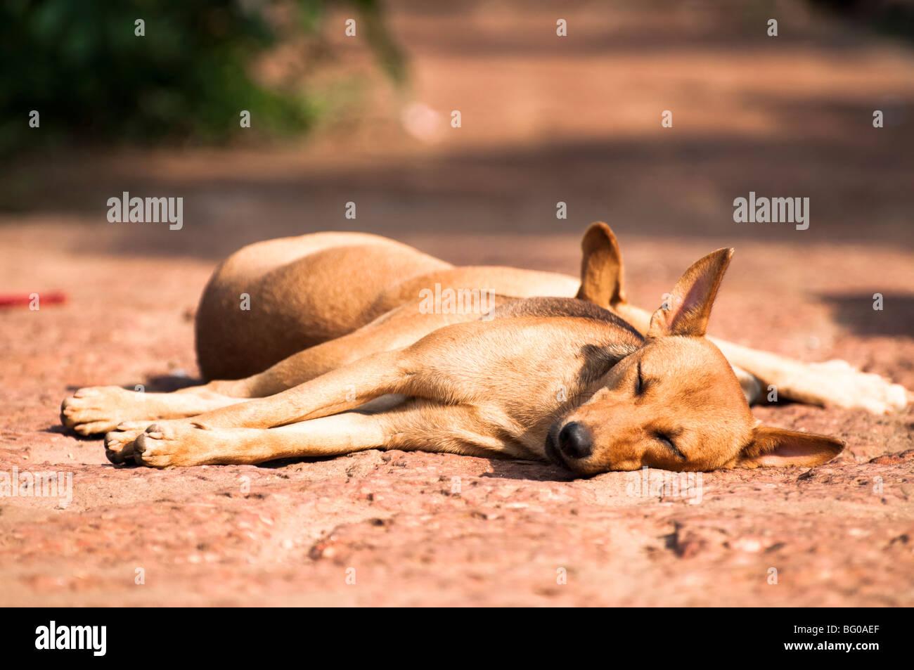 Sleeping Dogs on Path Stock Photo