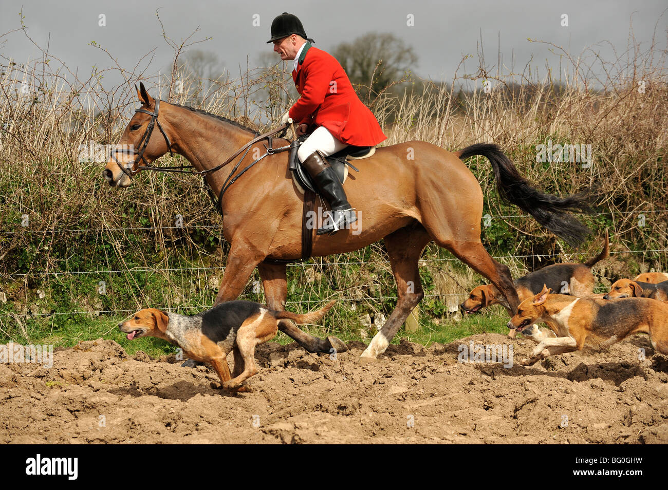 huntsman and hounds - Stock Image