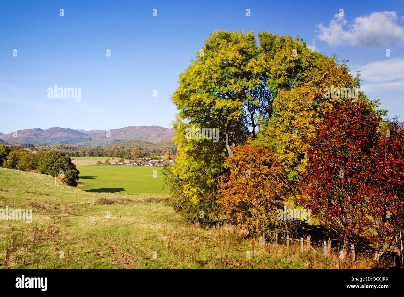 Autumn Colours on the Bogton Braes Walk near Comrie - Stock Image