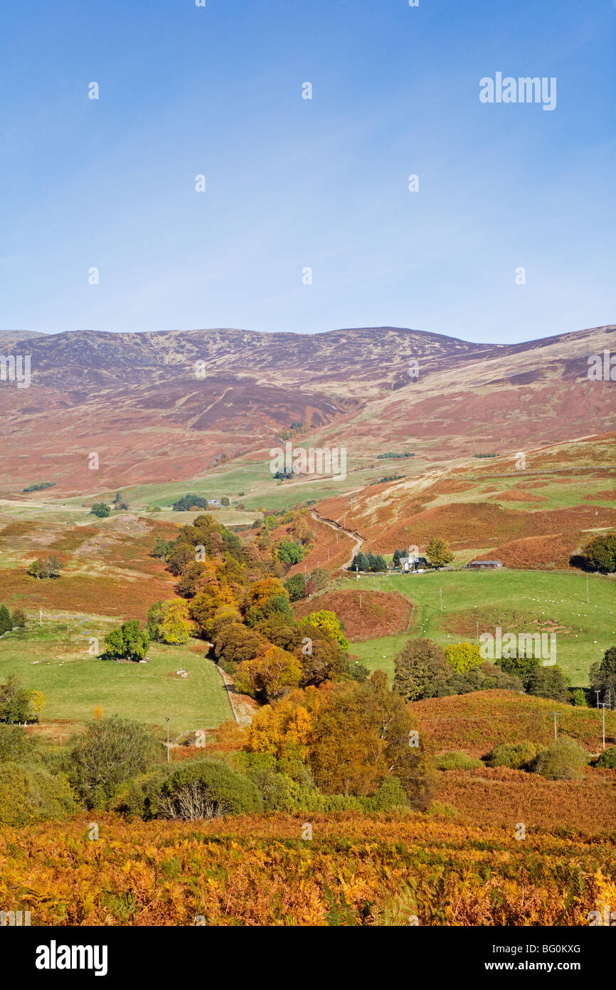 Autumn Colours on the Glen Lednock Circular Walk near Comrie - Stock Image