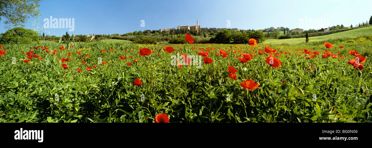 Poppy field with town of Pienza in distance, Tuscany, Italy, Europe - Stock Image