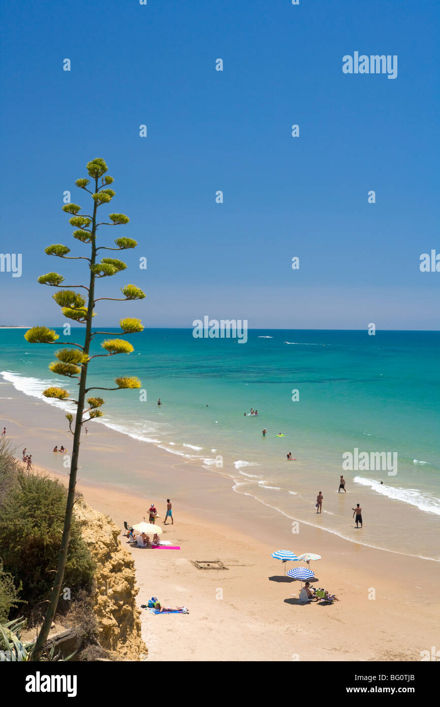 Conil de la Frontera, Costa de la Luz, Andalucia, Spain, Europe - Stock Image