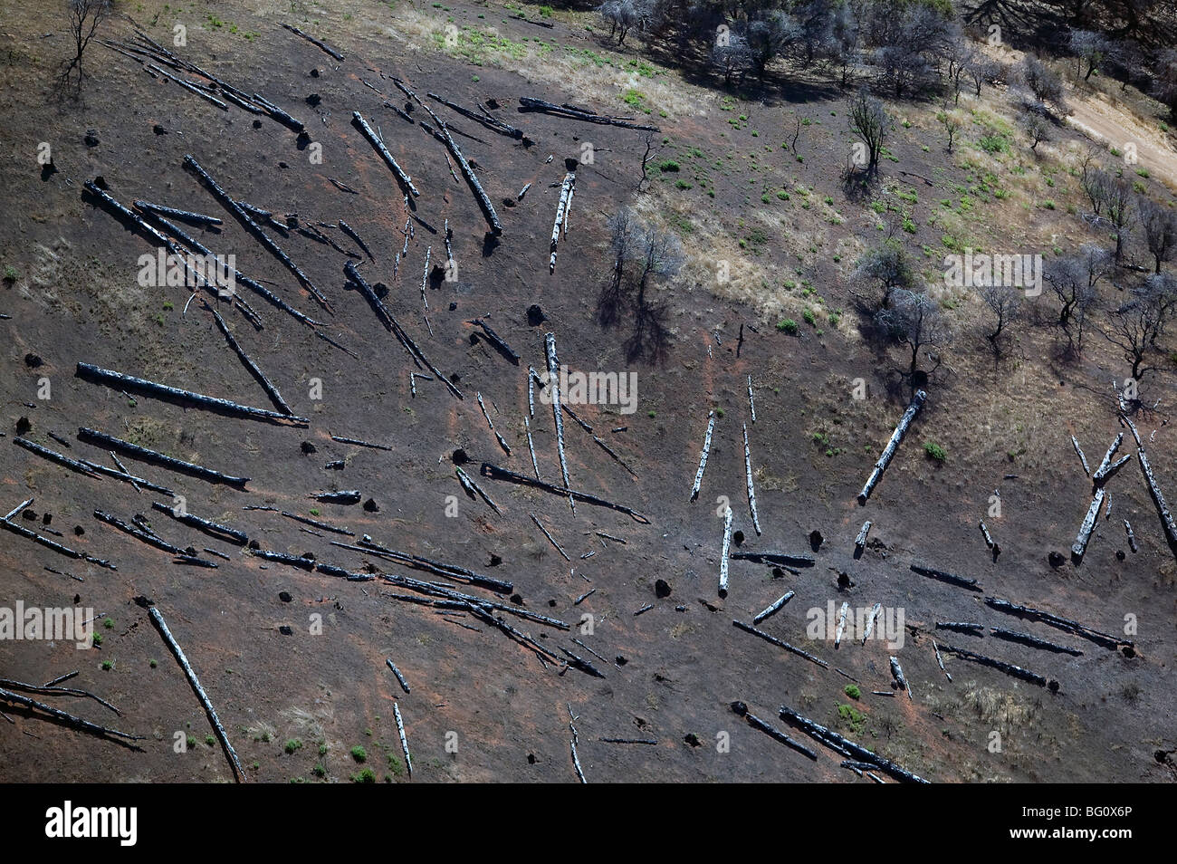 aerial view clear cutting invasive species Eucalyptus Angel Island 'San Francisco bay' - Stock Image