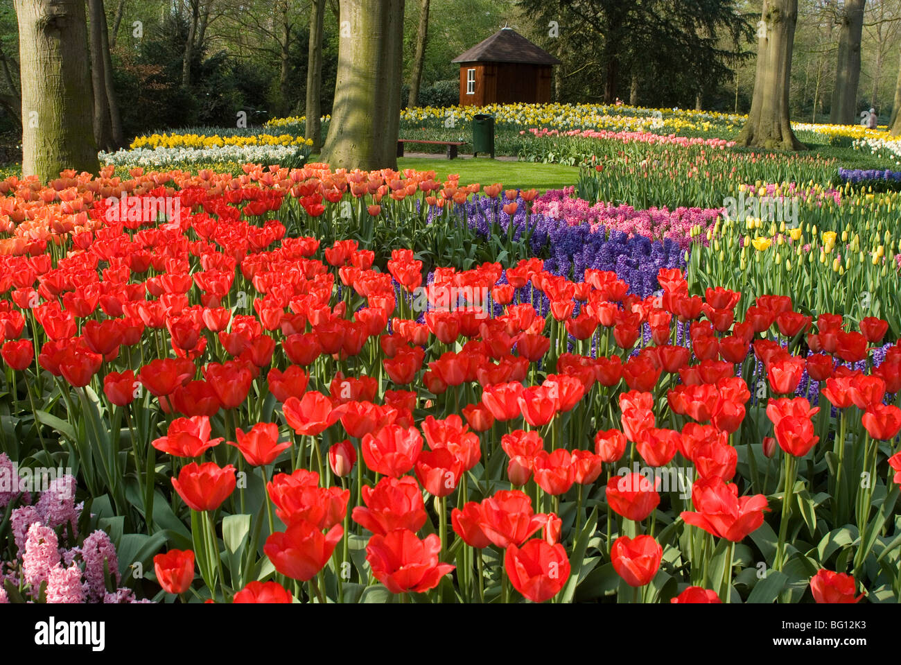 Flowers at Keukenhof Gardens, near Leiden, Netherlands, Europe - Stock Image