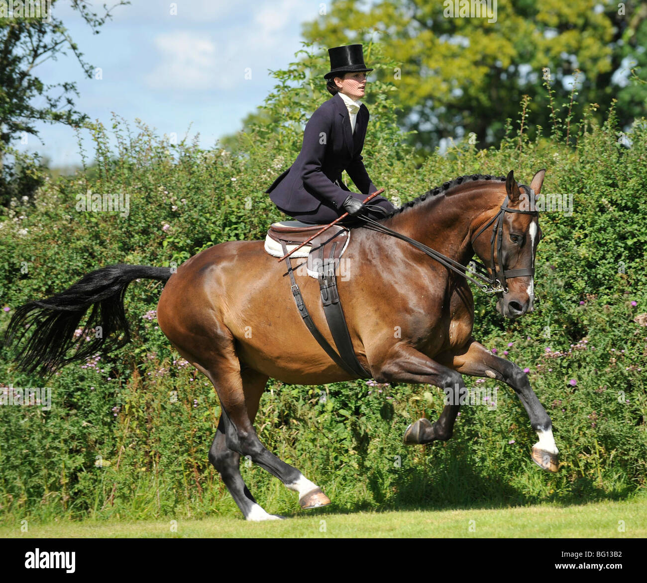 side saddle lady, galloping her show hunter - Stock Image