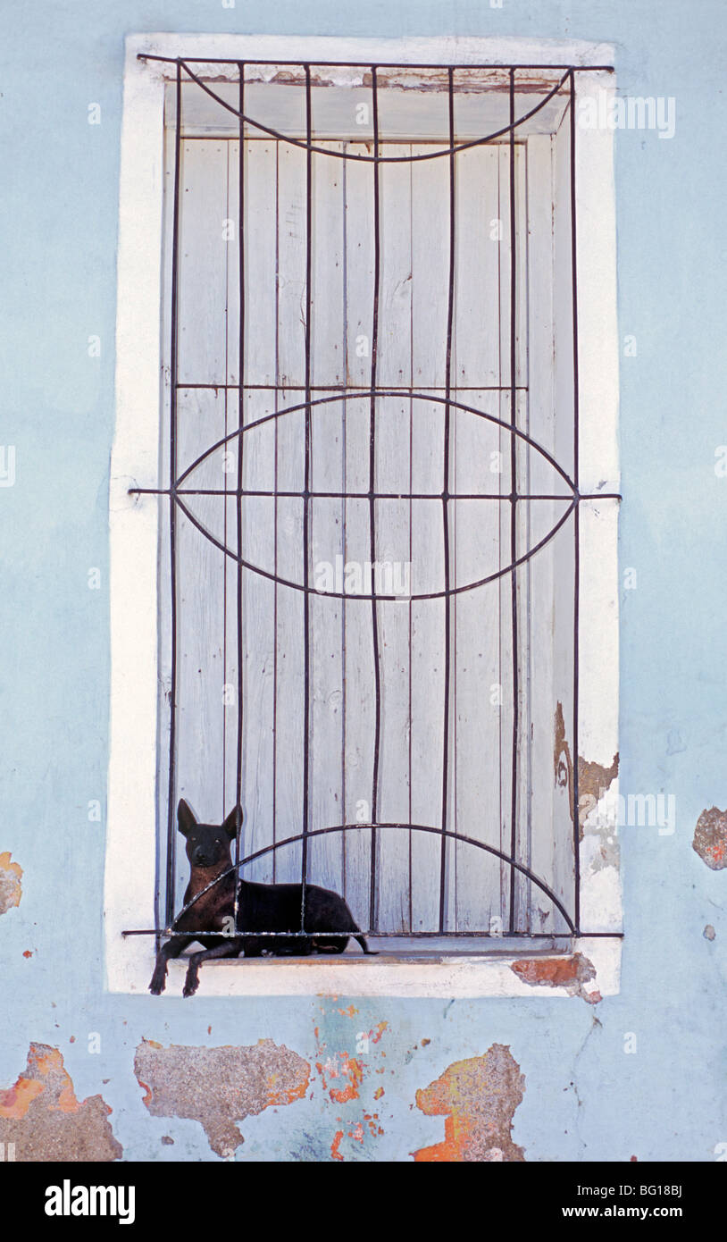 Small dog resting between shuttered windows and gratings, Sancti Spiritus, Cuba, West Indies, Central America - Stock Image
