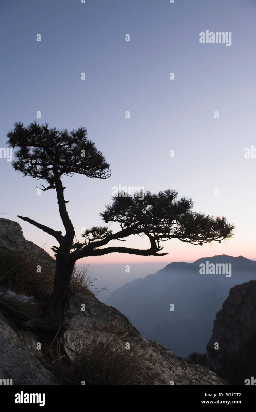 Pine tree silhouetted at dusk on Lushan mountain, UNESCO World Heritage Site, Jiangxi Province, China, Asia - Stock Image