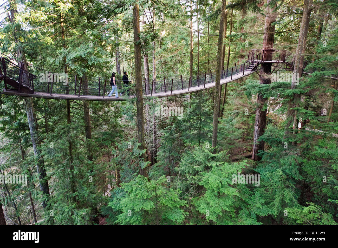 Tourists on a treetop walkway in Capilano Suspension Bridge and Park, Vancouver, British Columbia, Canada, North - Stock Image