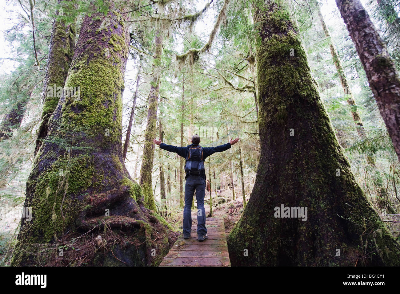 A hiker in the old growth forest at Carmanah Walbran Provincial Park, Vancouver Island, British Columbia, Canada, - Stock Image