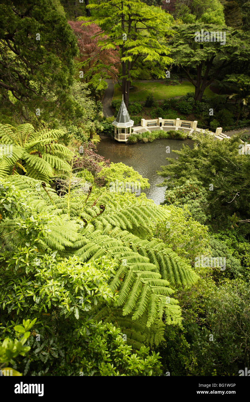 Tree ferns and Duck Pond, Wellington Botanic Garden, Wellington, North Island, New Zealand, Pacific - Stock Image