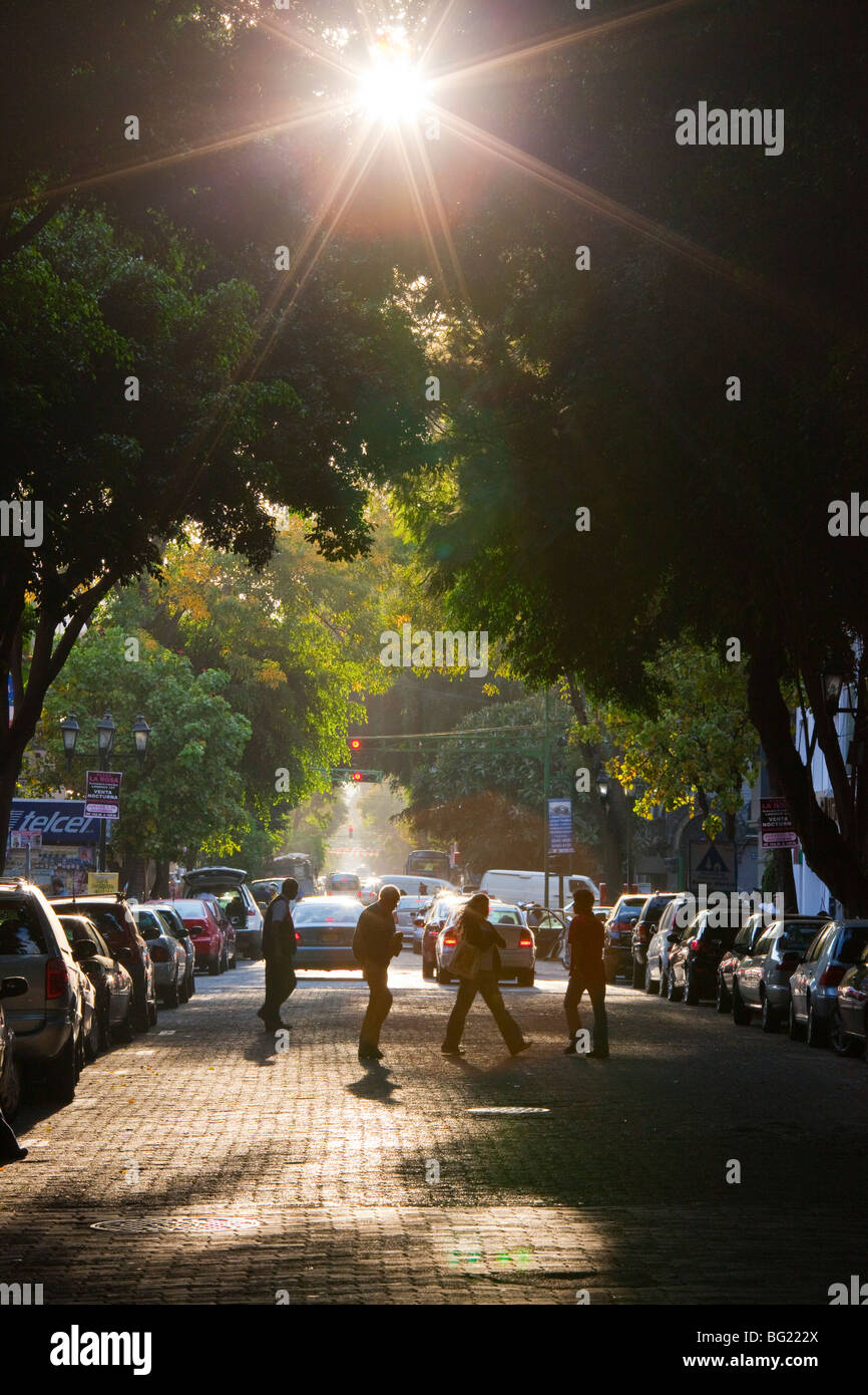 Tree lined street in the Zona Rosa in Mexico City Stock Photo
