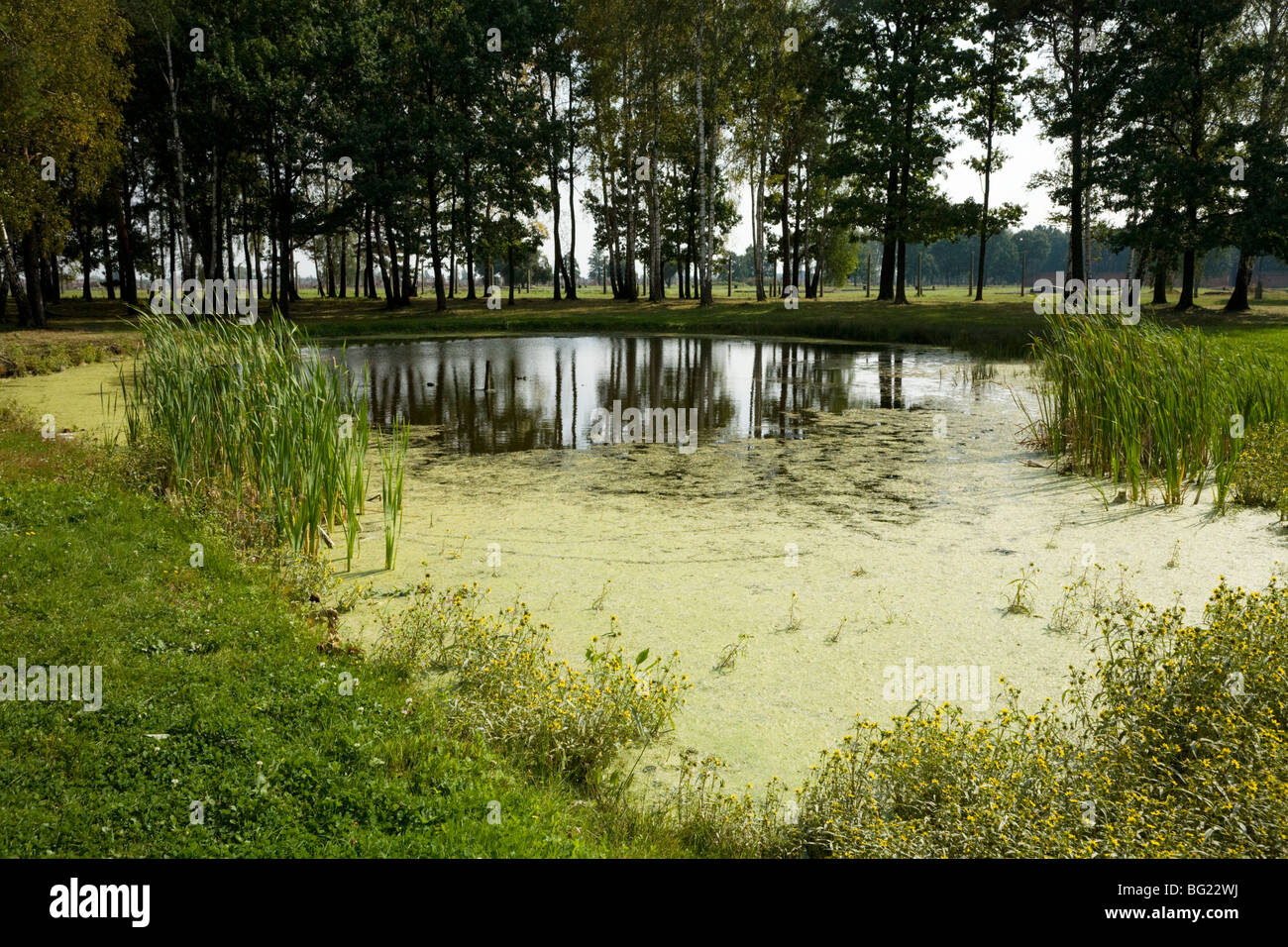 A pond containing the ashes of thousands of victims in the Auschwitz II - Birkenau Nazi concentration camp in Oswiecim, - Stock Image