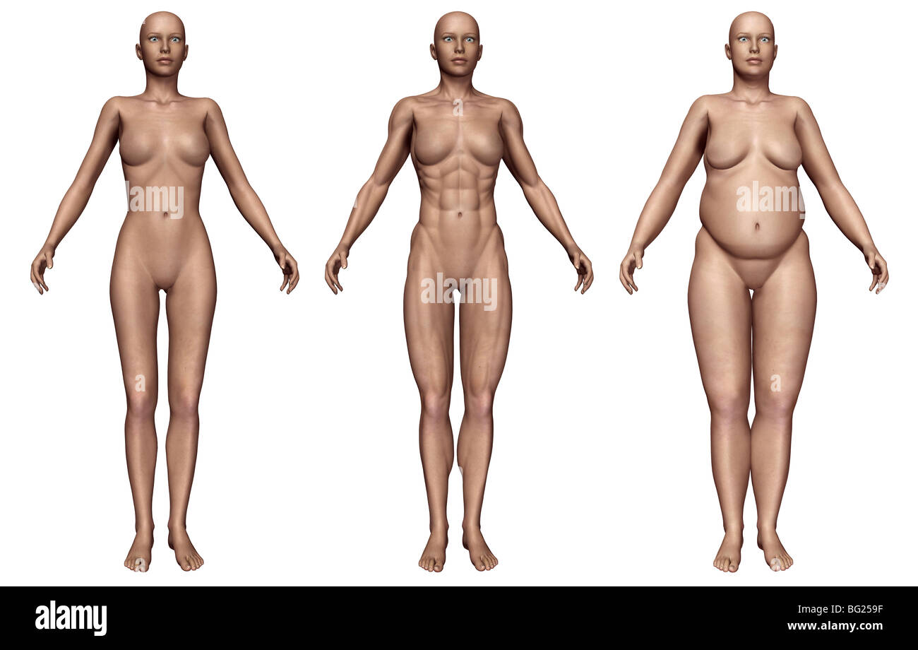 Human Female Body Types Showing Ectomorphic Mesomorphic And Stock