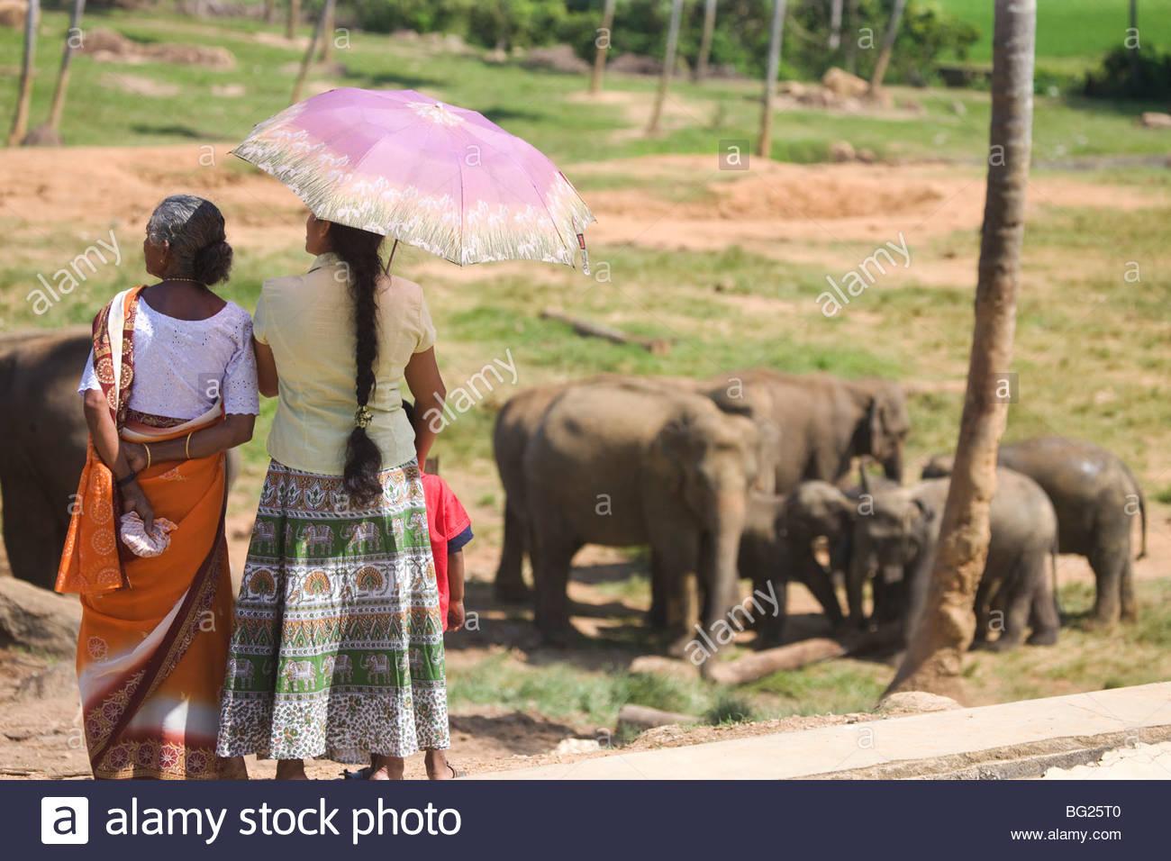 Pinnewela Elephant Orphanage, Sri Lanka Stock Photo