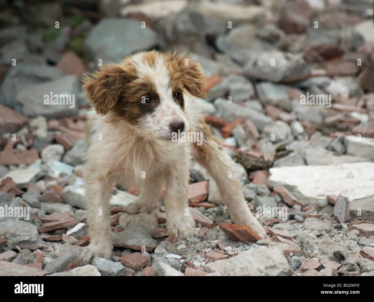 young dog - Stock Image