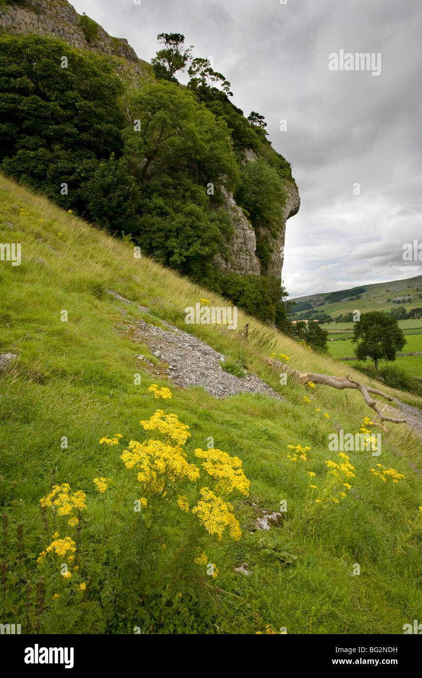 Kilnsey Crag, and overhanging cliff face popular with climbers, Wharfdale, Yorkshire Dales, England - Stock Image