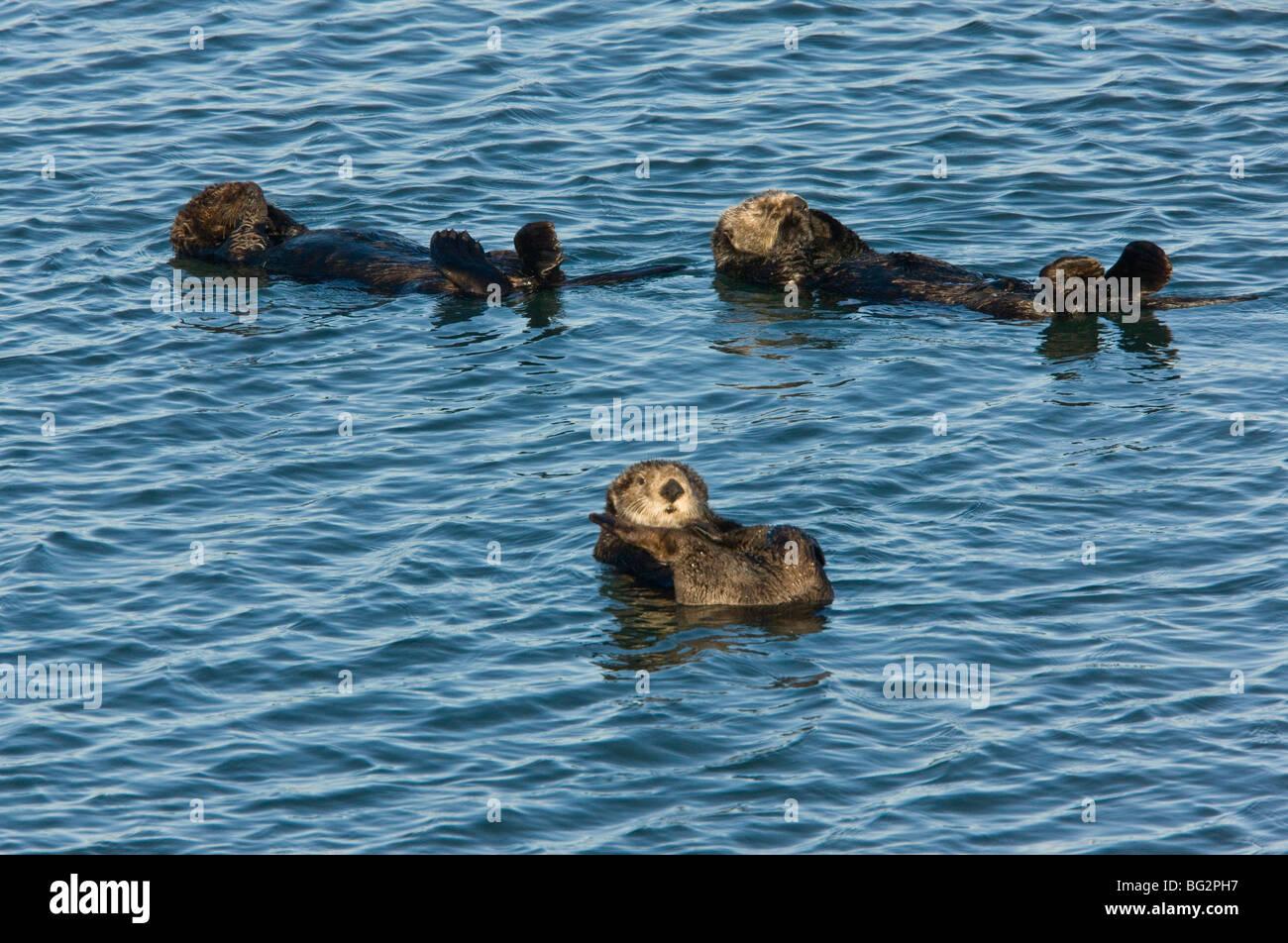 Floating On Backs Stock Photos & Floating On Backs Stock Images - Alamy