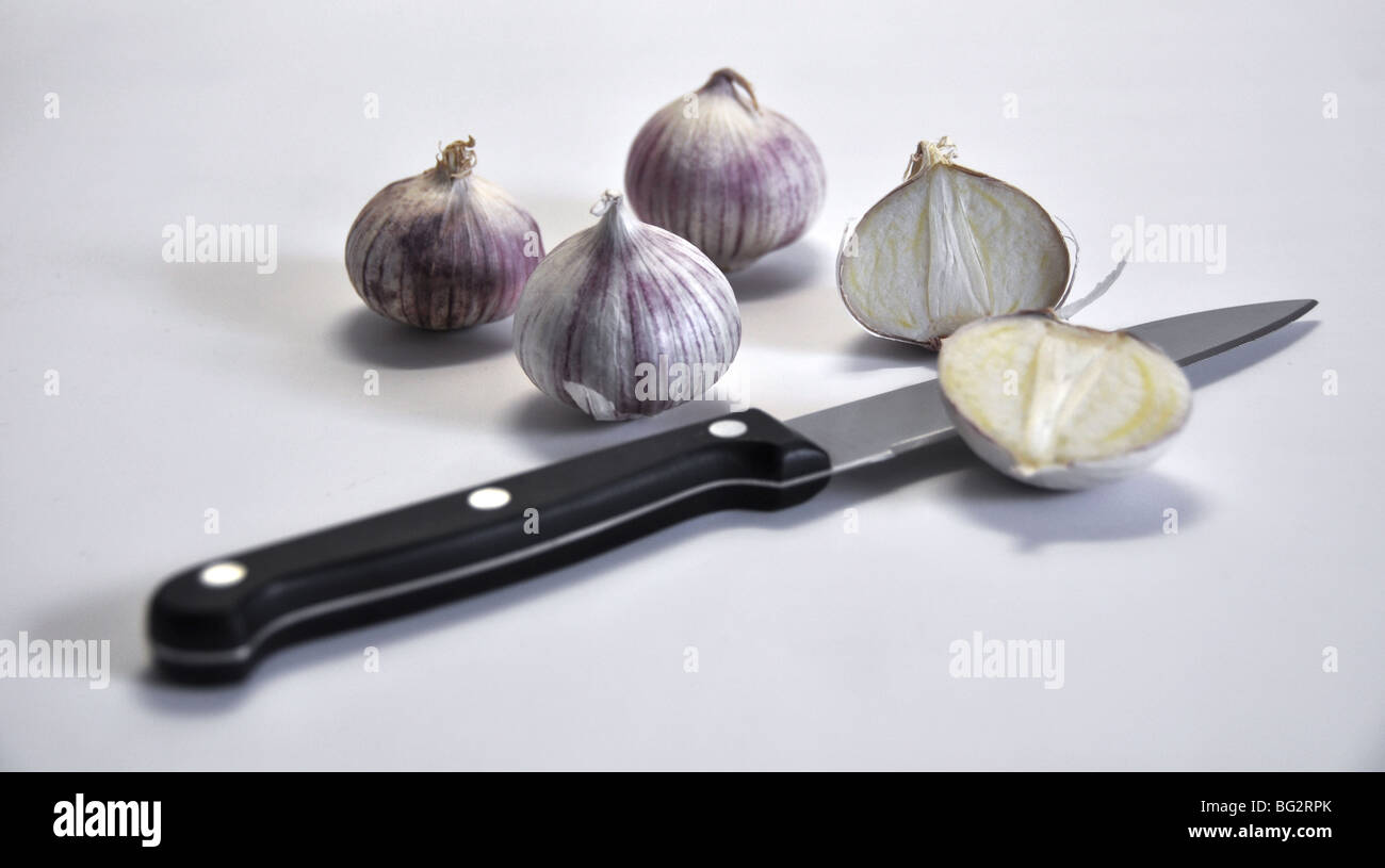 New exotic breed of garlic (Elephant garlic) that has only one clove! 3 whole garlics plus another one cut into - Stock Image