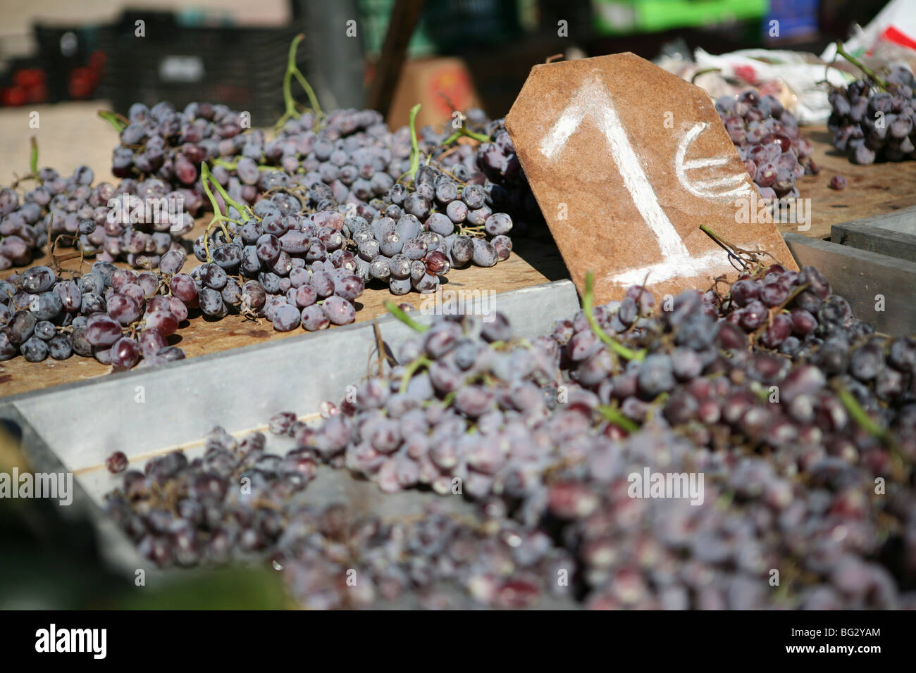 Fresh bunches of purple grapes for sale, 1 Euro / Vitis vinifera - Stock Image