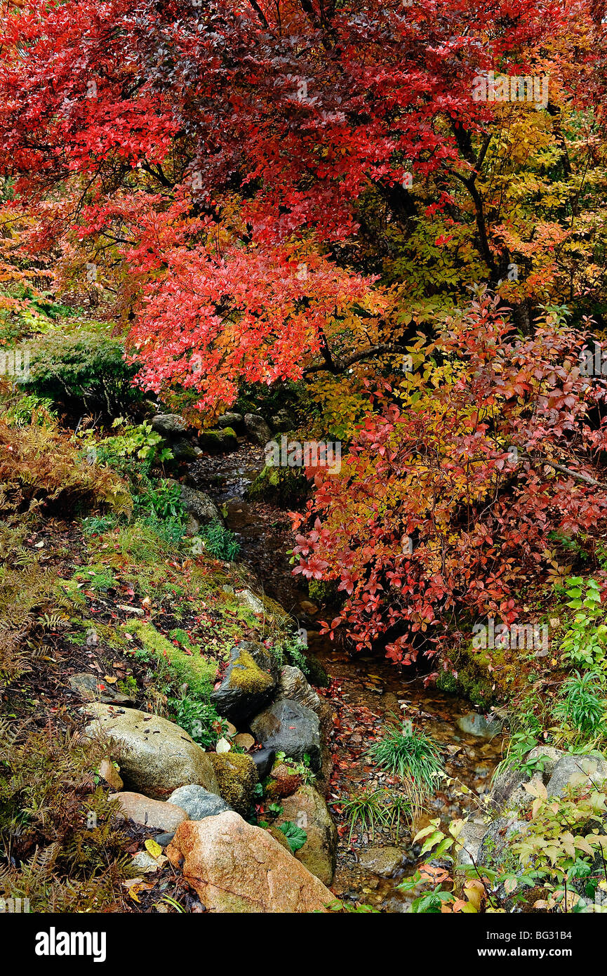 Autumn shrubs. - Stock Image