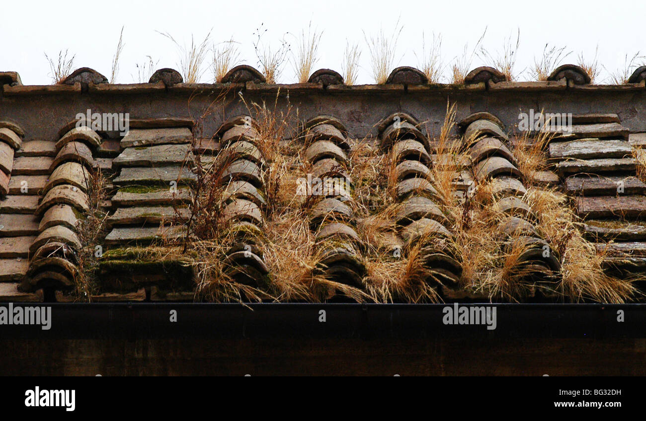 Grass Tiles Stock Photos & Grass Tiles Stock Images - Alamy