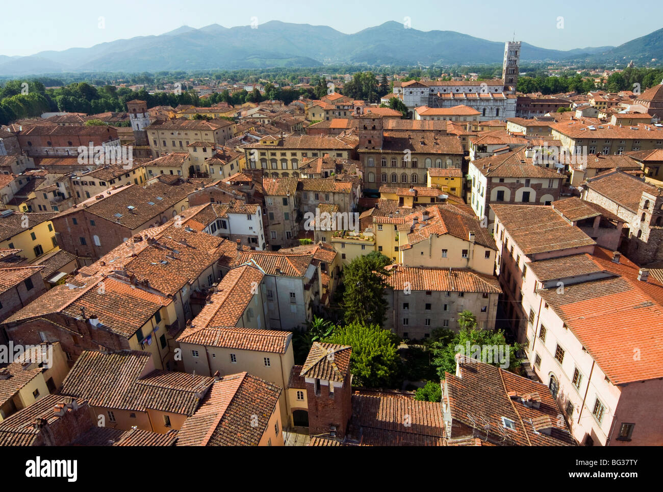 View of Lucca from Torre Guinigi, Lucca, Tuscany, Italy, Europe - Stock Image