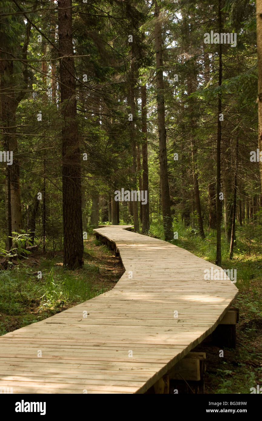 wooden path in forest - Stock Image