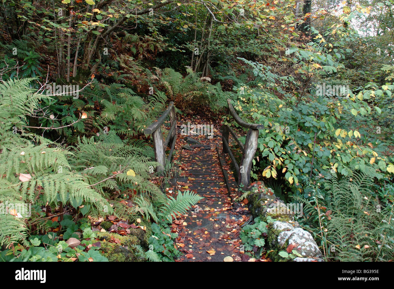 Old wooden bridge in woodland garden at Ruskin's house in the Lake District, U.K. - Stock Image
