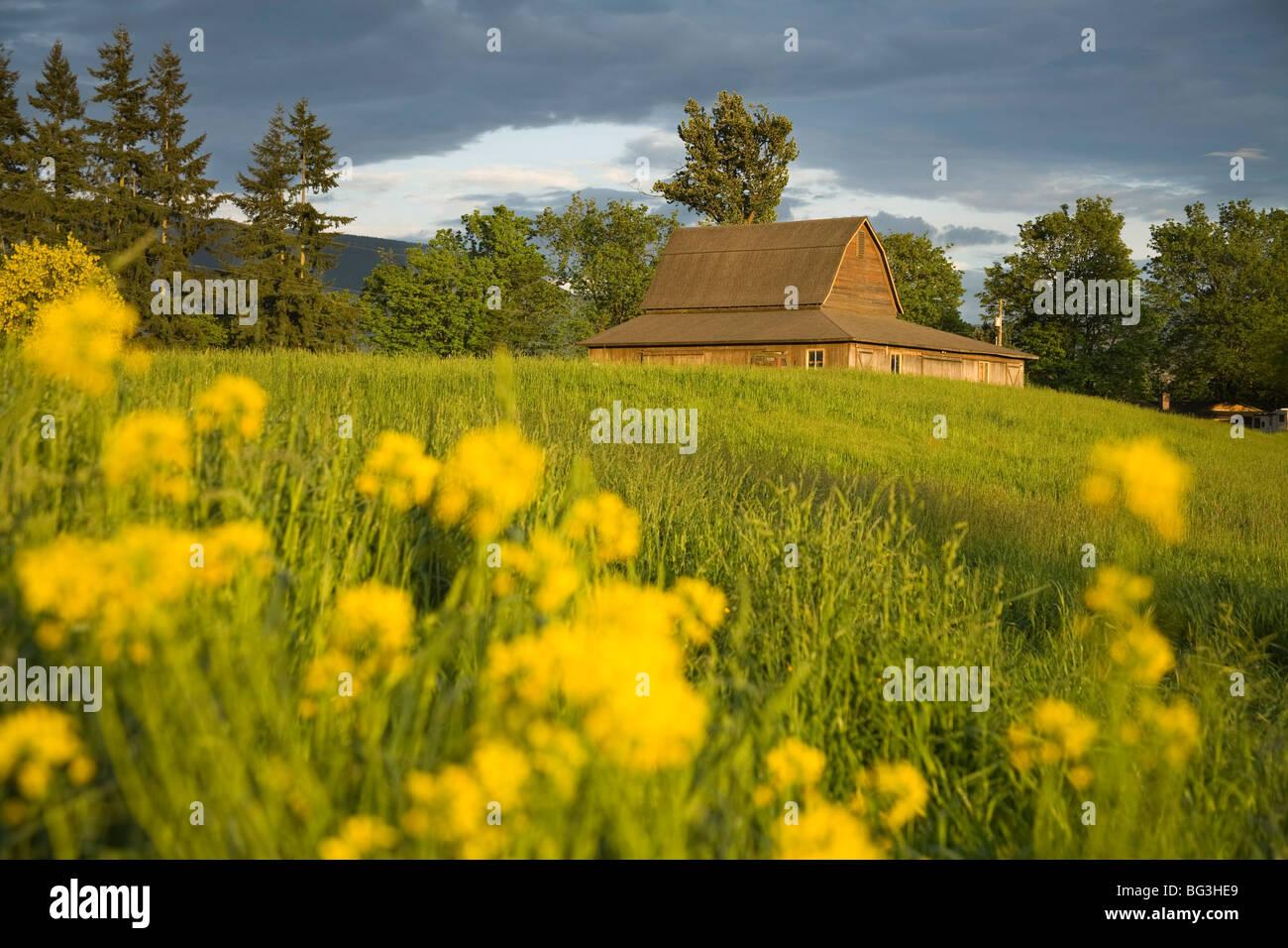 Barn, Sultan City, Stevens Pass Scenic Highway, Washington State, United States of America, North America - Stock Image