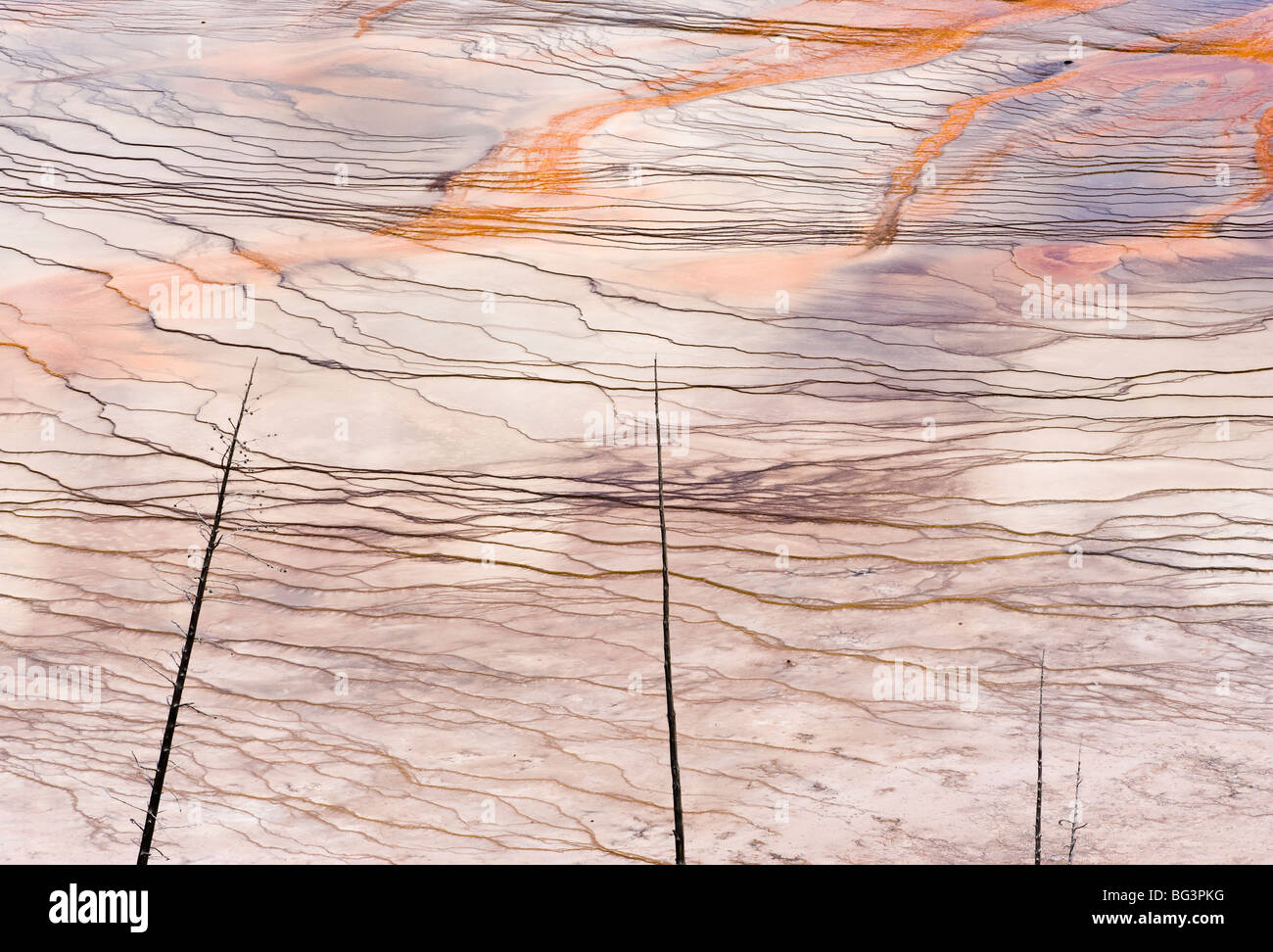 A detail view of the Grand Prismatic Springs bacterial mats in Yellowstone National Park, Wyoming, USA. - Stock Image