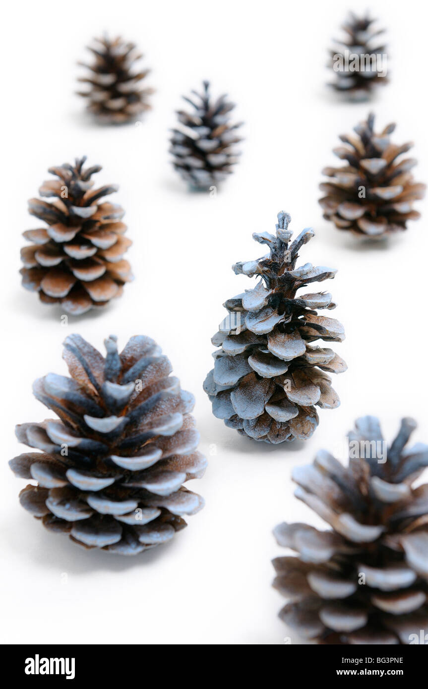 Pine cones looking like Christmas trees on white snowy background - Stock Image