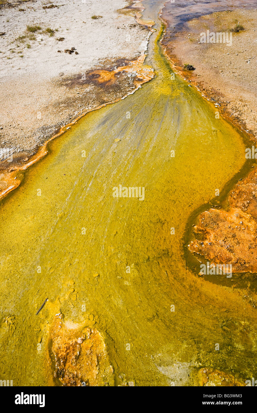 Pigmented Bacteria in the runoff water from a hot spring in Yellowstone National Park, Wyoming, USA. - Stock Image