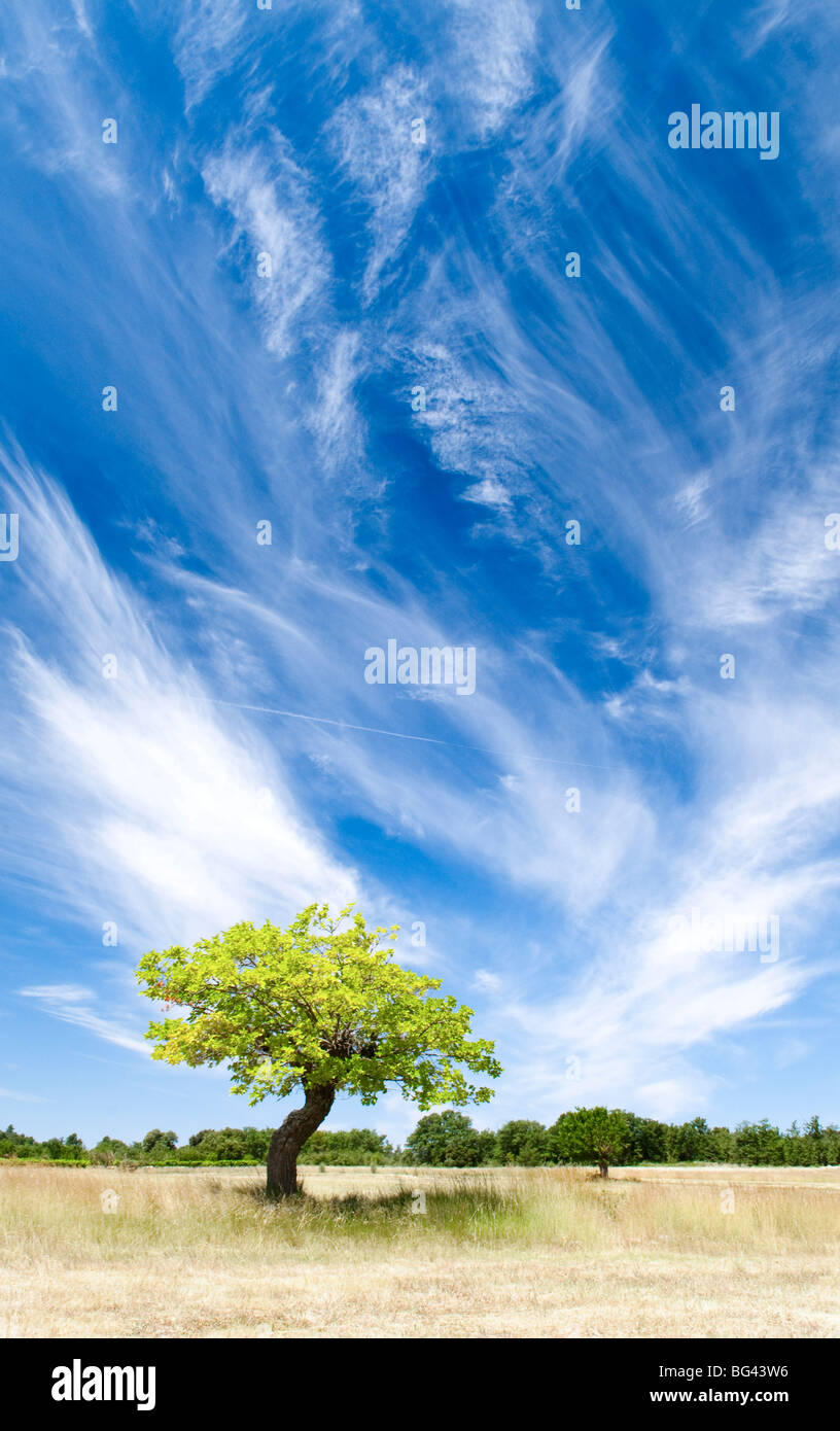 Tree and clouds, Provence, France - Stock Image