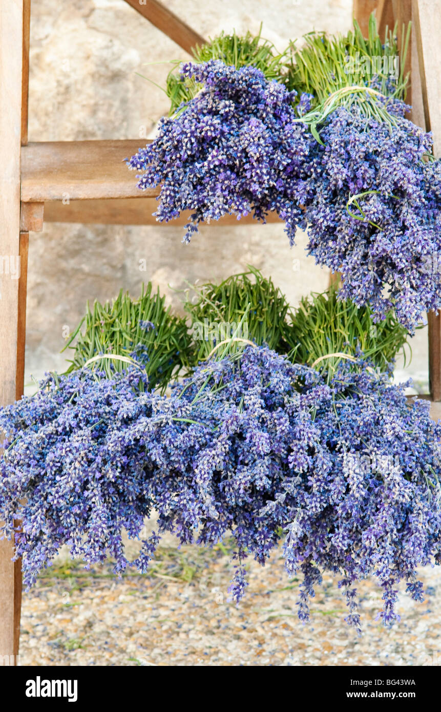 Lavender bundles for sale outside of a shop in Sault, Provence, France - Stock Image