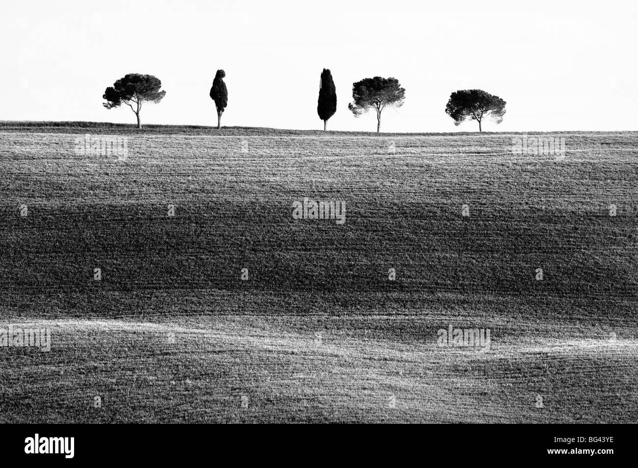 Classic Tuscan landscape, near San Quirico, Valle de Orcia, Tuscany, Italy - Stock Image
