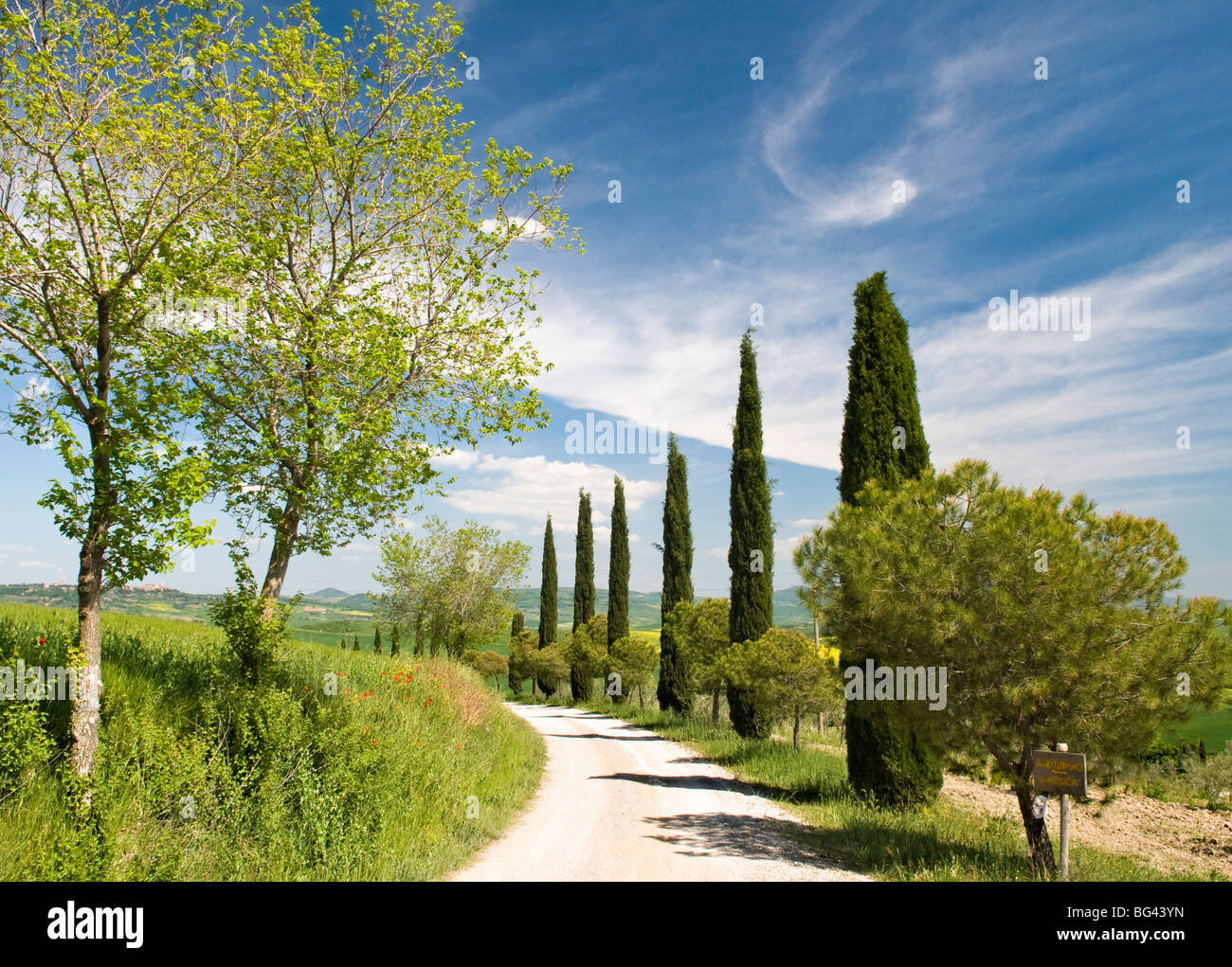 Traditional Tuscan landscape, near San Quirico, Valle de Orcia, Tuscany, Italy - Stock Image