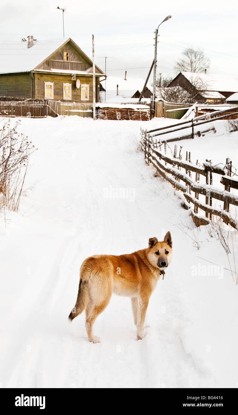 Winter, Pikalevo, Leningrad region, Russia - Stock Image