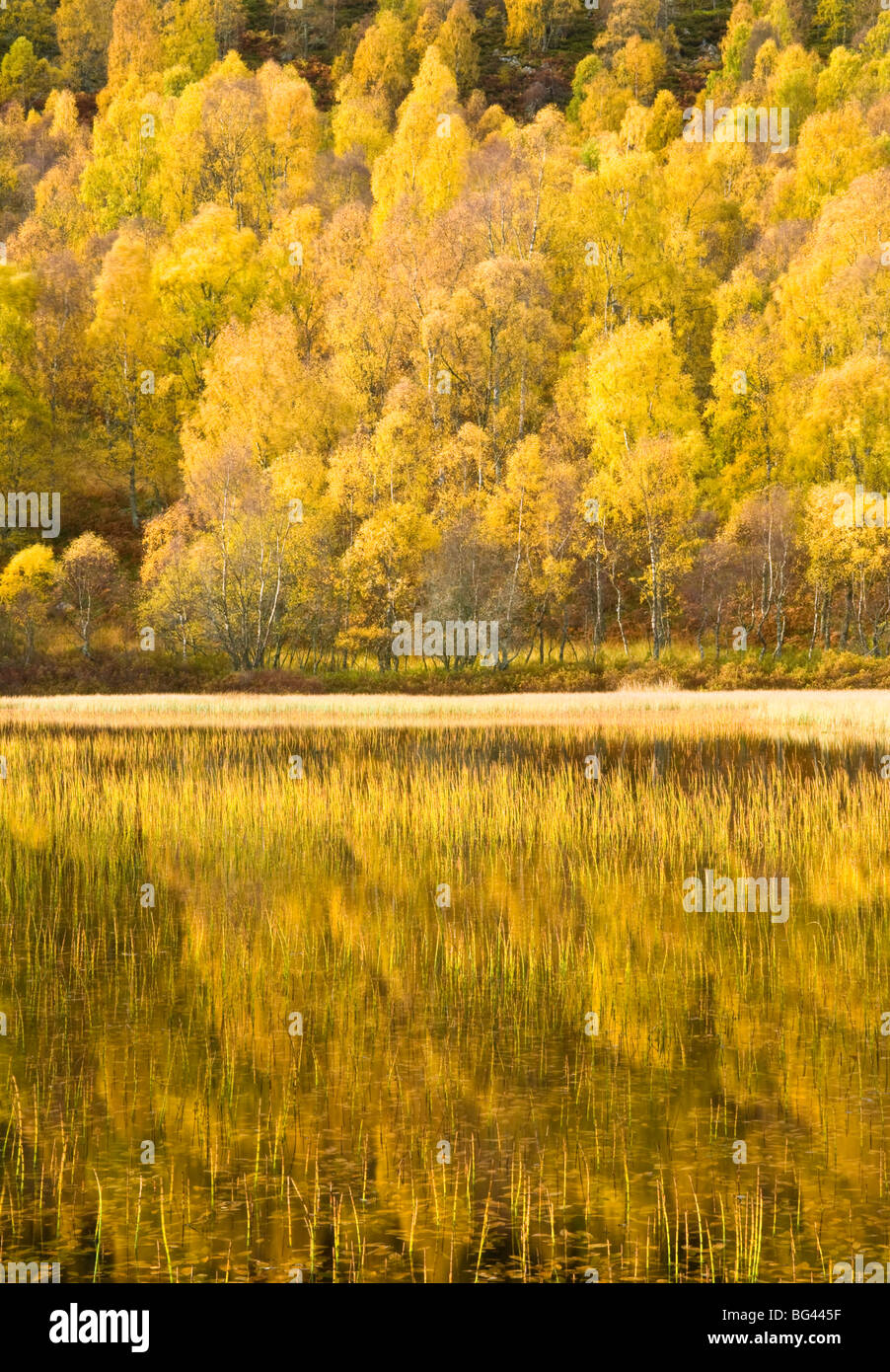 Loch reflections, Cairngorms National Park, Highlands, Scotland, UK - Stock Image