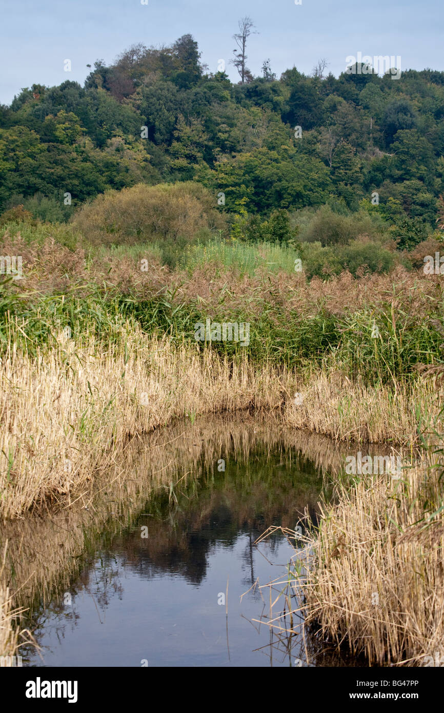 Wildfowl and Wetlands Trust at Arundel, West Sussex, England - Stock Image