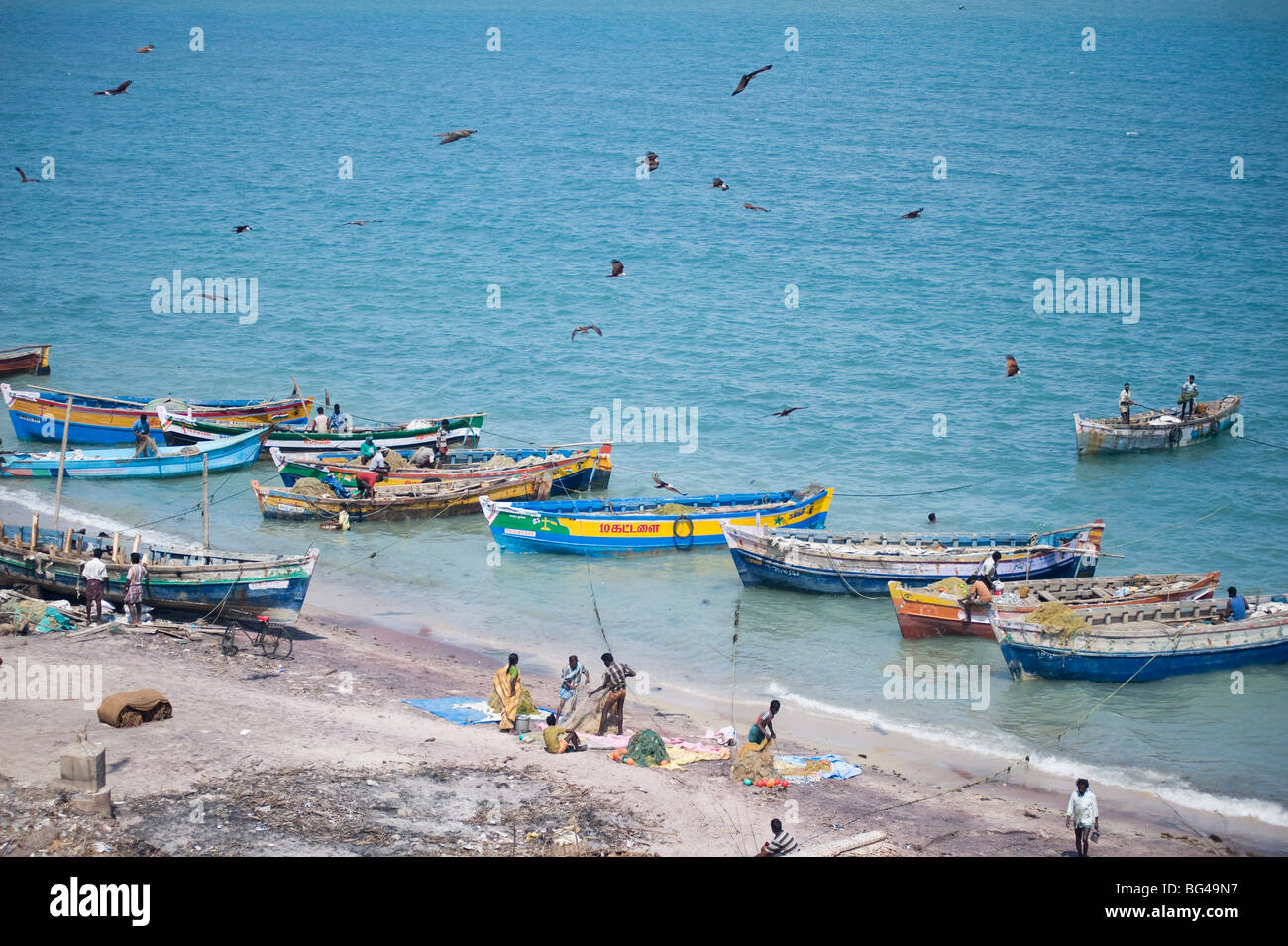 Brahmin kites soar over the boats as the morning's catch of fish is unloaded, Dhanushkodi, Tamil Nadu, India, - Stock Image