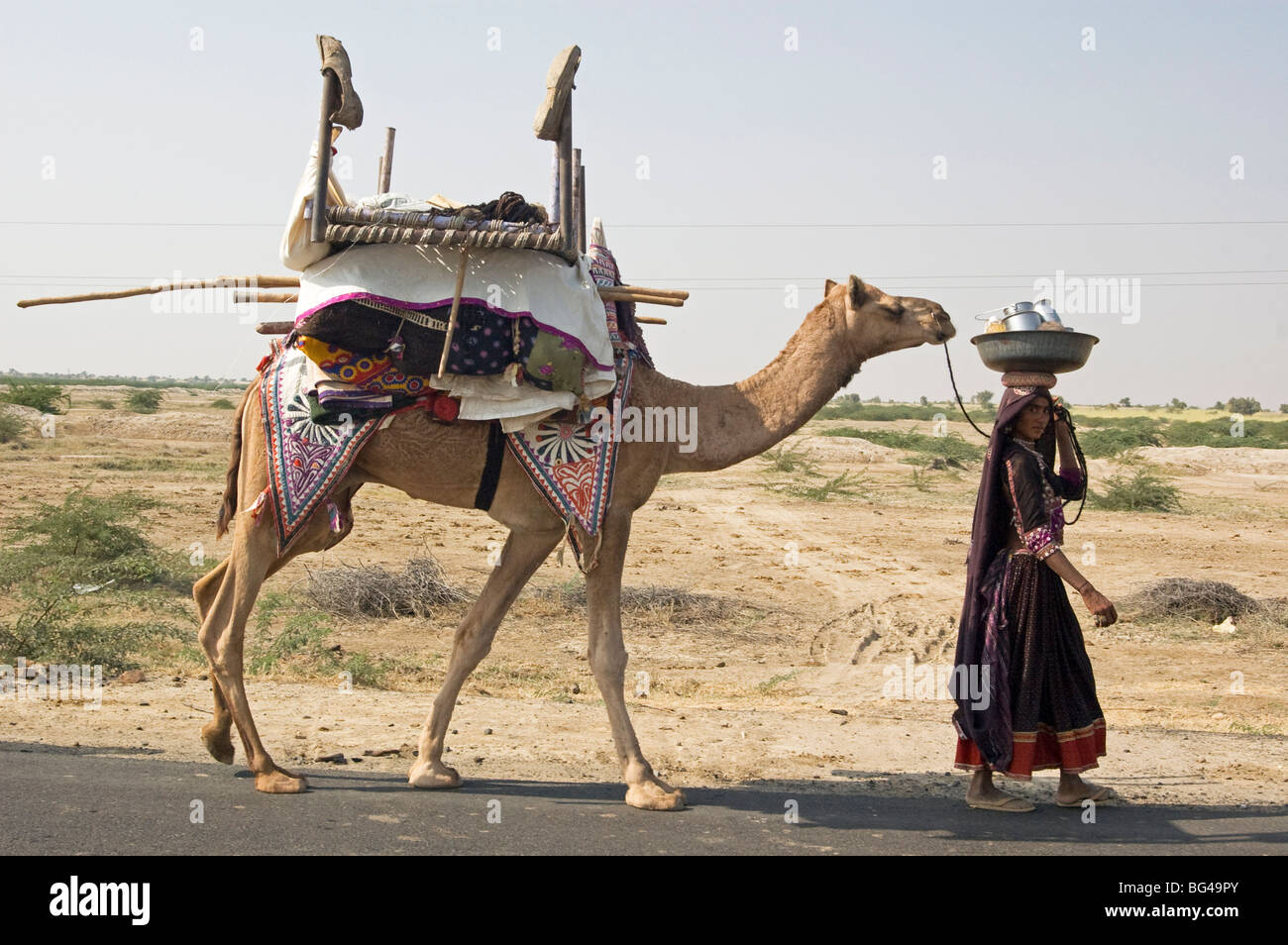 Nomadic Rabhari tribeswoman walking in the Kachchh desert with camel carrying her possessions, Lakhdar district, - Stock Image